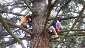Climbing the Douglas Fir at Pine St